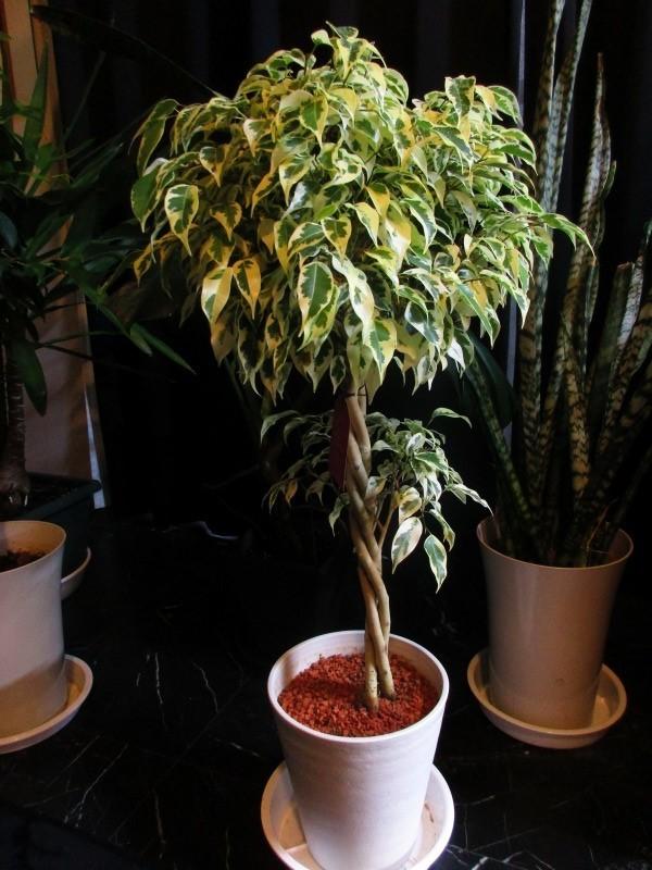 植物「挿し木完了 」_b0362459_19433307.jpg