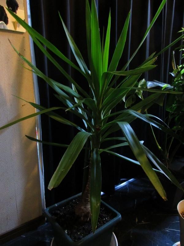 植物「挿し木完了 」_b0362459_19455672.jpg