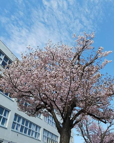 GW10連休スタートと春の花<札幌の暮らし情報>_a0293265_17052713.jpg