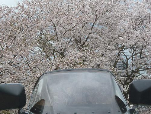 水曜ツーリング OHV限定/常神半島・神子_e0254365_17150574.jpg