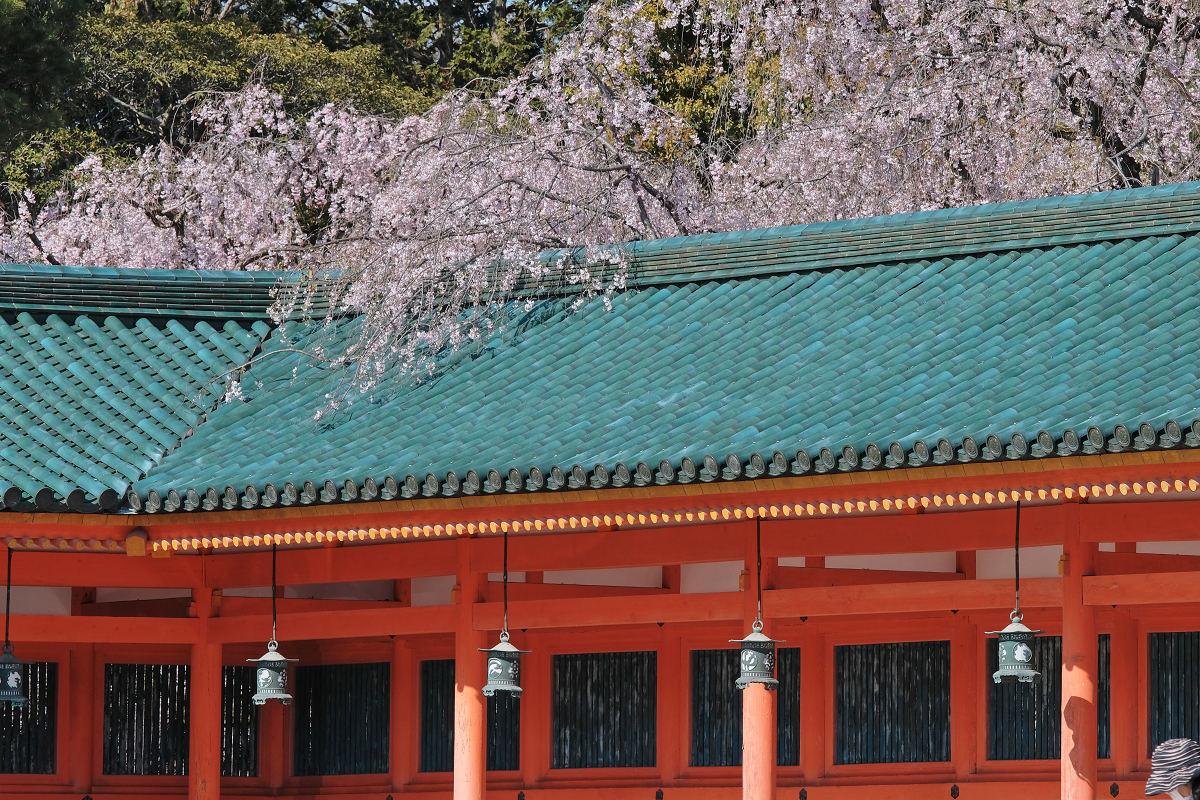 桜 2019 平安神宮_f0021869_23382915.jpg