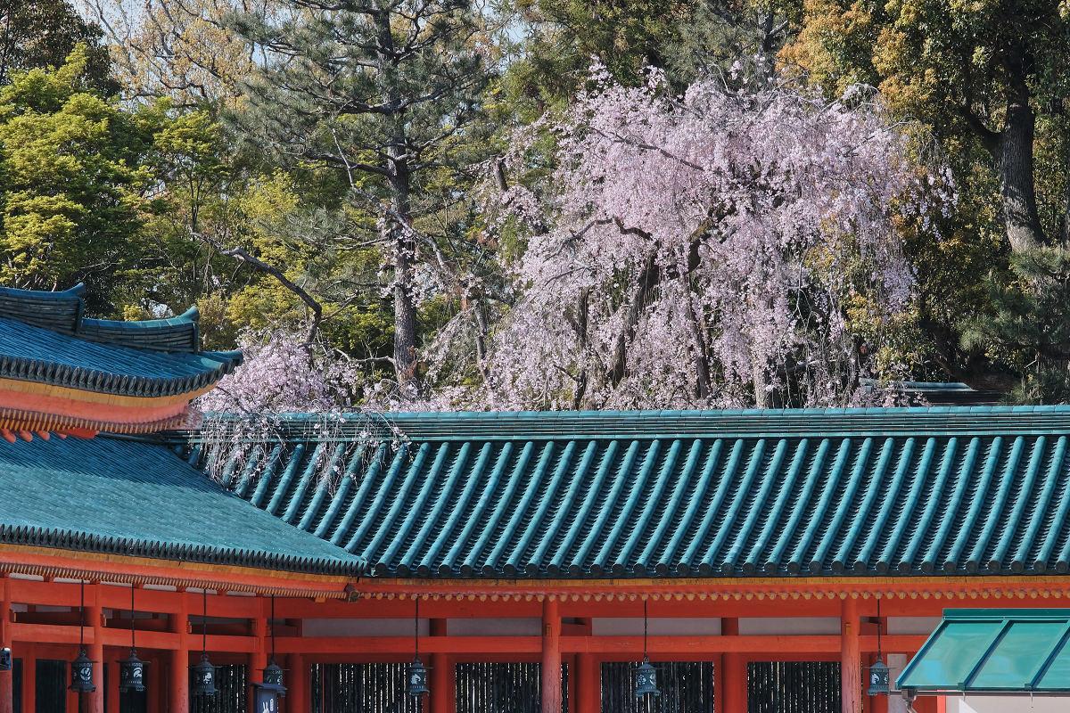 桜 2019 平安神宮_f0021869_23382925.jpg
