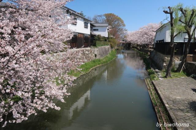 故郷の春~八幡堀にて_b0055171_16155580.jpg