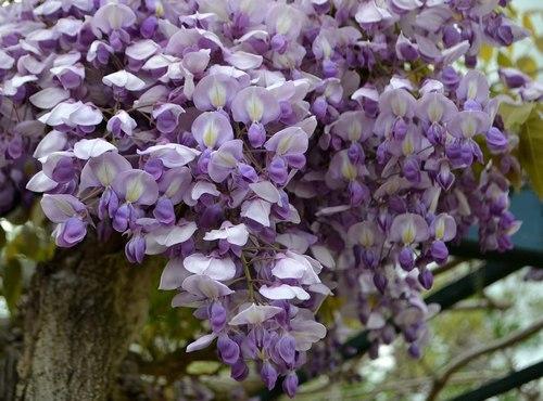 中山寺は花の寺_b0102572_11370835.jpg