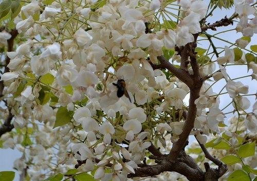 中山寺は花の寺_b0102572_11372973.jpg