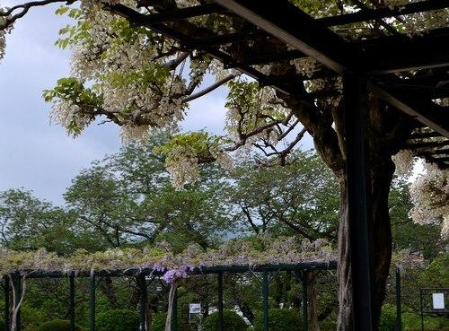 中山寺は花の寺_b0102572_11375291.jpg
