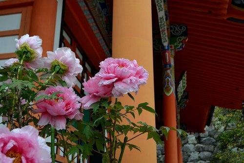 中山寺は花の寺_b0102572_11390318.jpg