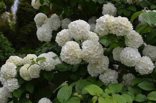 中山寺は花の寺_b0102572_11404203.jpg