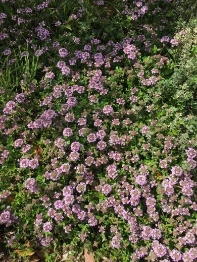 庭の花たち 〜初夏の香り〜_c0334574_20001266.jpg