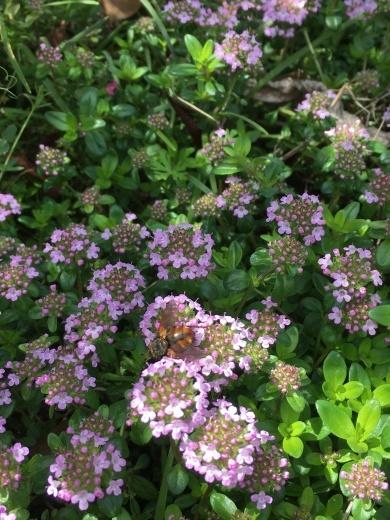 庭の花たち 〜初夏の香り〜_c0334574_20040190.jpg