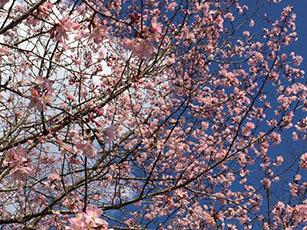 春_e0182479_13004970.jpg