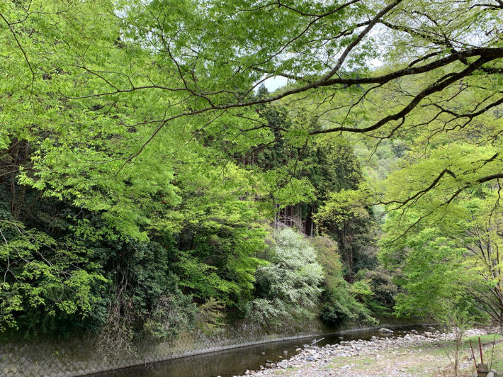 新緑を堪能しに京都大原へ_f0378683_23184108.jpg
