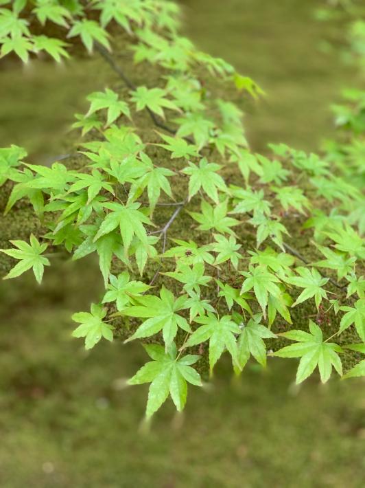 新緑を堪能しに京都大原へ_f0378683_23195419.jpg