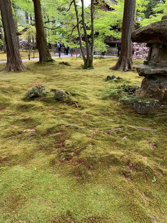 新緑を堪能しに京都大原へ_f0378683_23214666.jpg