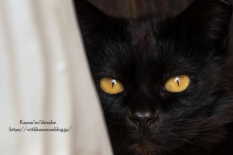 黒猫さん_d0148187_12082200.jpg