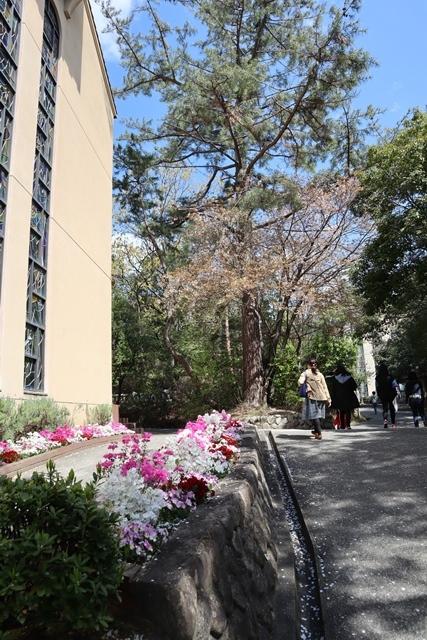 私の愛する街西宮市、阪神淡路大震災からの復興23年後の姿・・・復興した文教都市西宮、名門校神戸女学院・関西学院大学の美しさ_d0181492_20580437.jpg