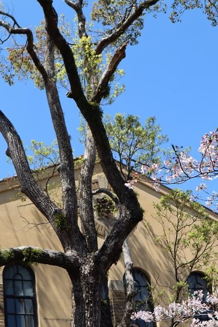 私の愛する街西宮市、阪神淡路大震災からの復興23年後の姿・・・復興した文教都市西宮、名門校神戸女学院・関西学院大学の美しさ_d0181492_23322023.jpg