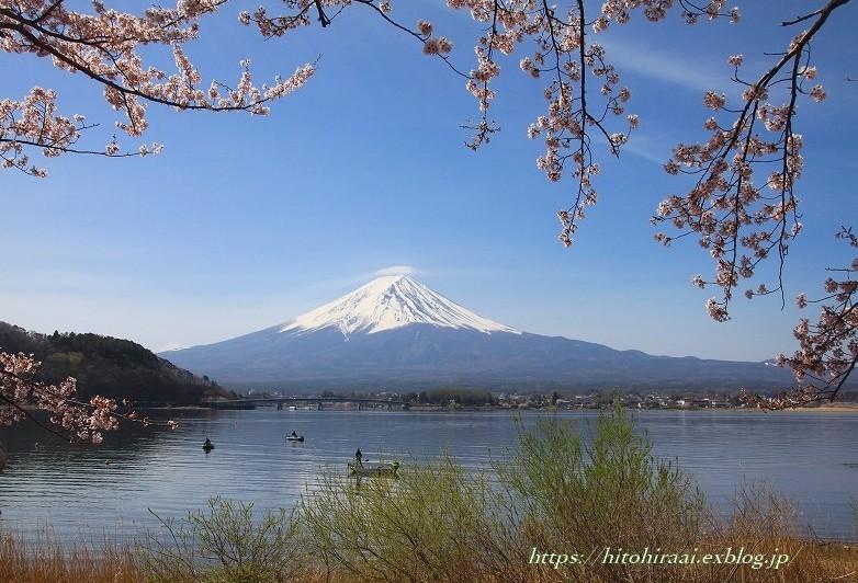 富士山と桜 河口湖畔_f0374092_09383064.jpg