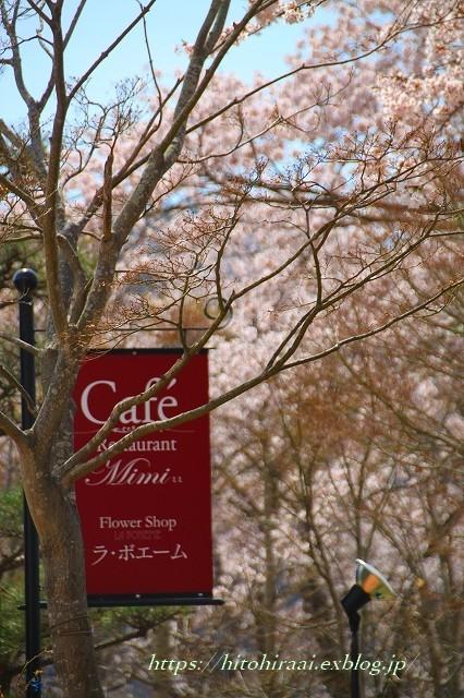 富士山と桜 @河口湖畔のcafe_f0374092_11364546.jpg