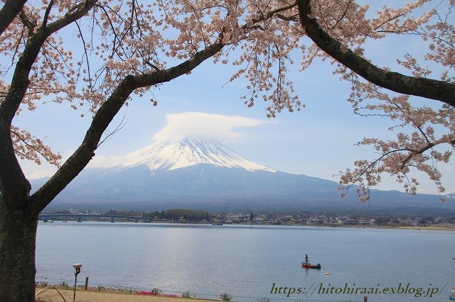 富士山と桜 @河口湖畔のcafe_f0374092_11371746.jpg