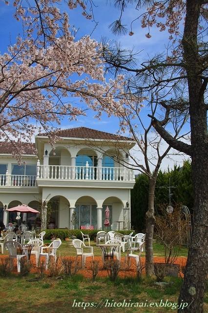 富士山と桜 @河口湖畔のcafe_f0374092_11453708.jpg