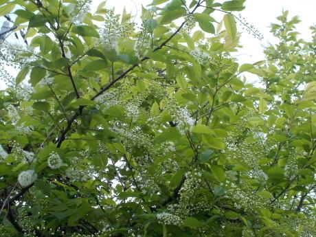 アンニンゴ咲く_a0203003_21200736.jpg