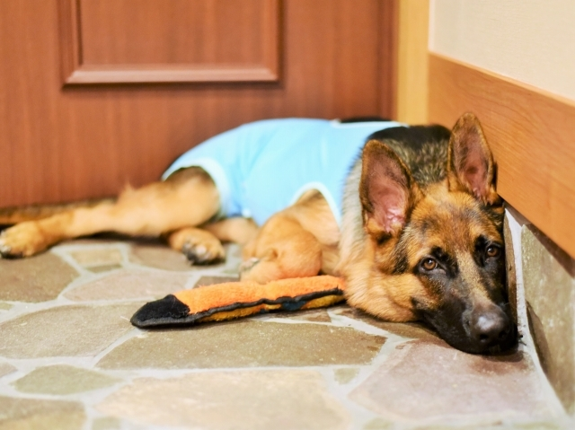 待つ子犬_d0360206_00442192.jpg