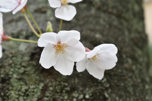 大阪市福島区のやきとり六源です!_d0199623_05321558.jpg
