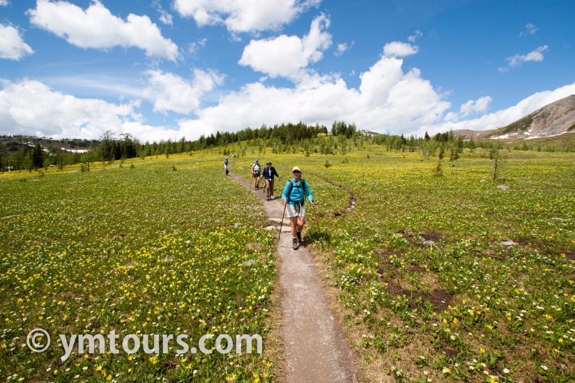 カナディアンロッキー 夏のハイキングシーズン到来間近! 高山植物の魅力と種類を大特集します。_d0112928_06301882.jpg