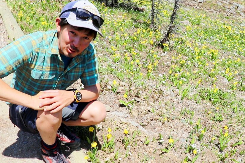 カナディアンロッキー 夏のハイキングシーズン到来間近! 高山植物の魅力と種類を大特集します。_d0112928_06302835.jpg
