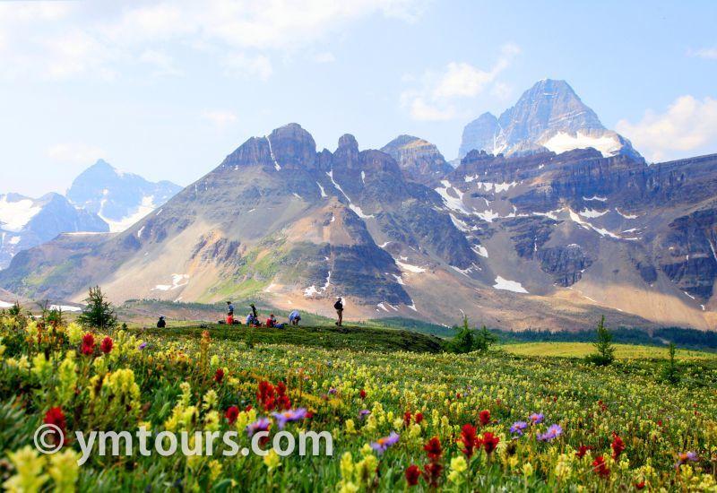 カナディアンロッキー 夏のハイキングシーズン到来間近! 高山植物の魅力と種類を大特集します。_d0112928_06325086.jpg