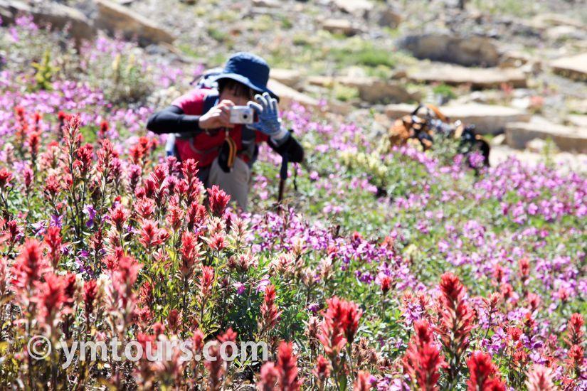 カナディアンロッキー 夏のハイキングシーズン到来間近! 高山植物の魅力と種類を大特集します。_d0112928_06503316.jpg
