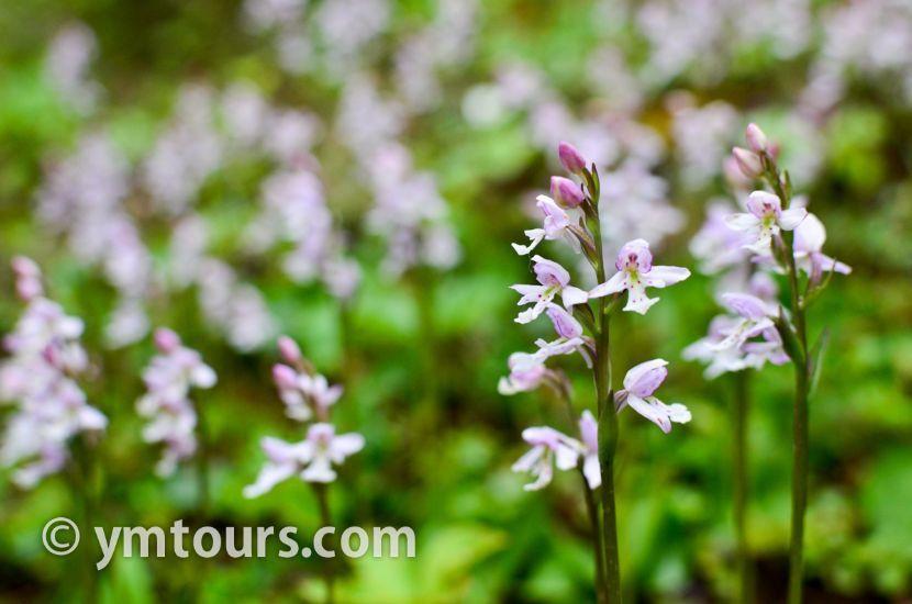 カナディアンロッキー 夏のハイキングシーズン到来間近! 高山植物の魅力と種類を大特集します。_d0112928_06505702.jpg