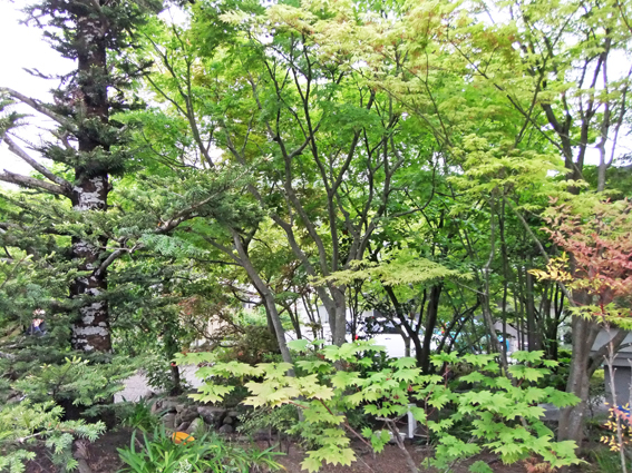 新緑の庭_f0045132_18473294.jpg