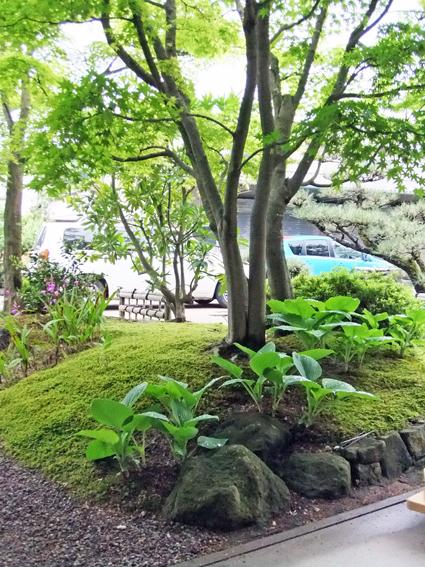 新緑の庭_f0045132_18474069.jpg