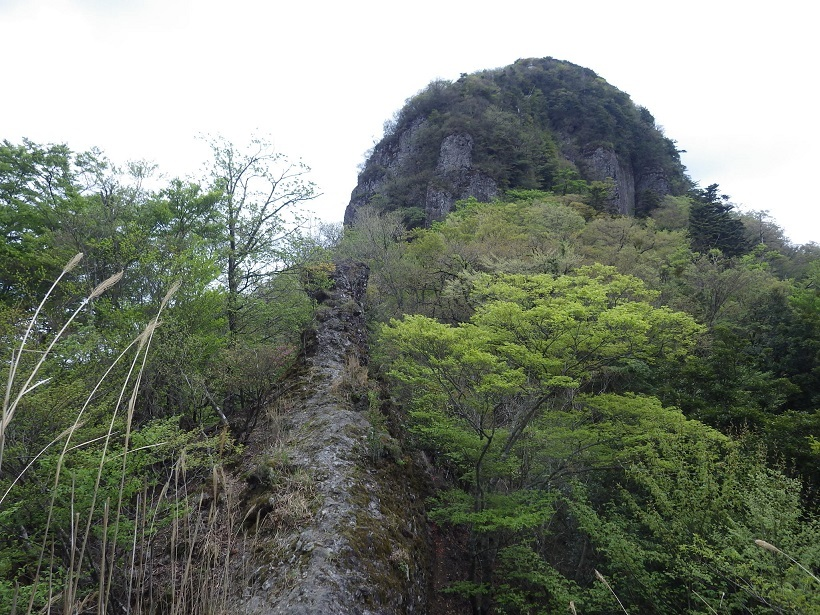 鷹ノ巣山へ_e0164643_15244890.jpg