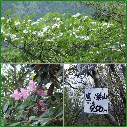 鷹ノ巣山へ_e0164643_15245683.jpg