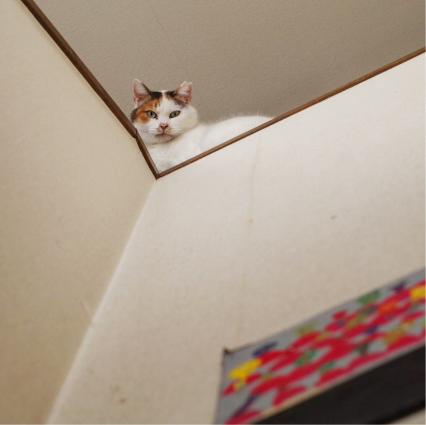 3階から見下ろしてた。_a0028451_10443128.jpg