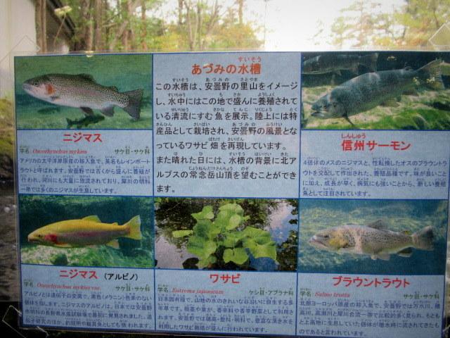 f0236260_17514234.jpg