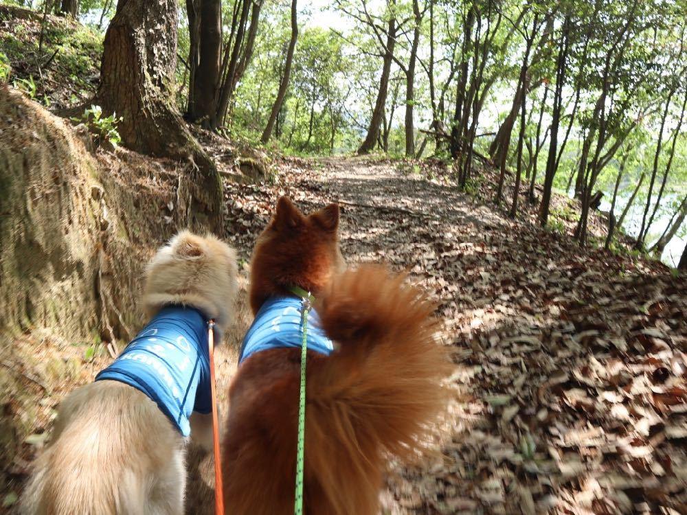 マルルの里帰り(2)〜公渕(きんぶち)森林公園〜_a0119263_18532662.jpg