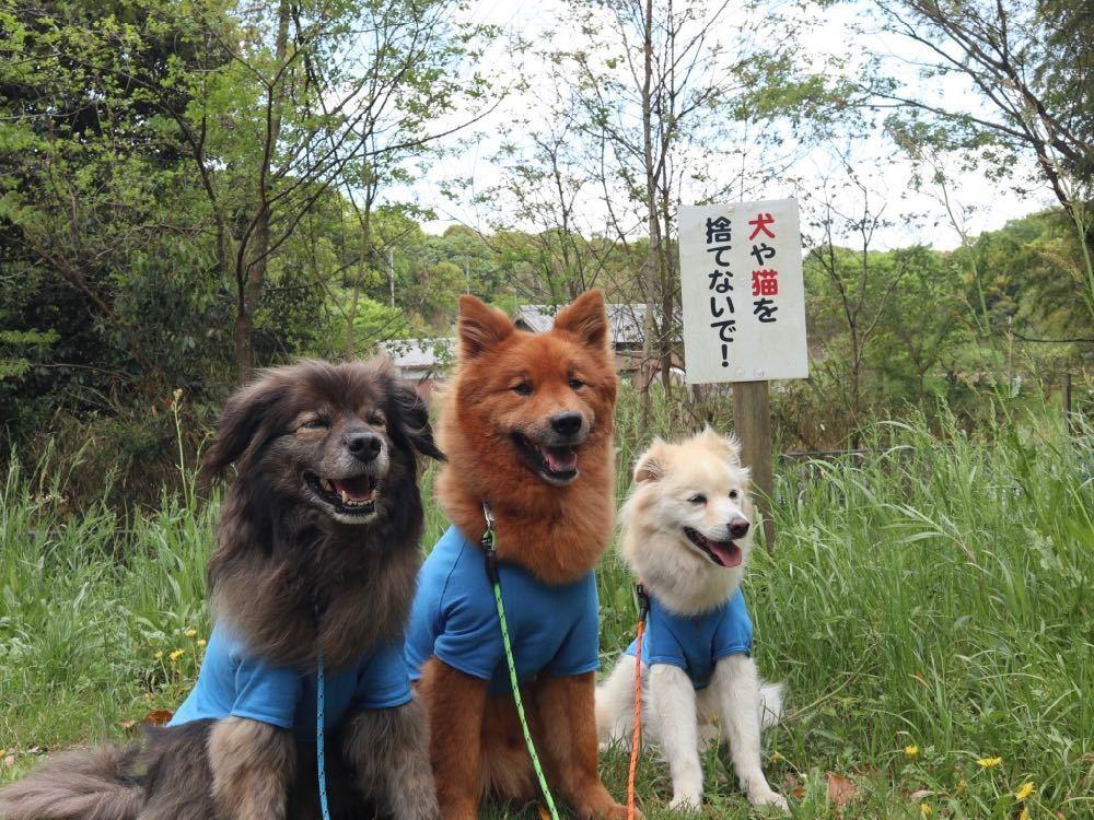 マルルの里帰り(2)〜公渕(きんぶち)森林公園〜_a0119263_19024955.jpg