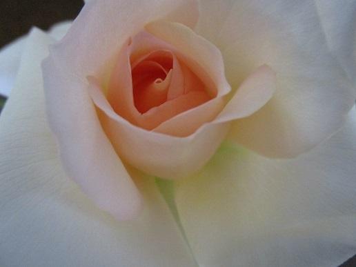ベランダの花/ 平成最後の日_d0006467_19142908.jpg