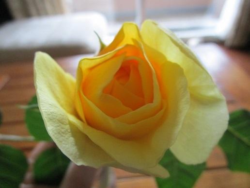 ベランダの花/ 平成最後の日_d0006467_19261435.jpg