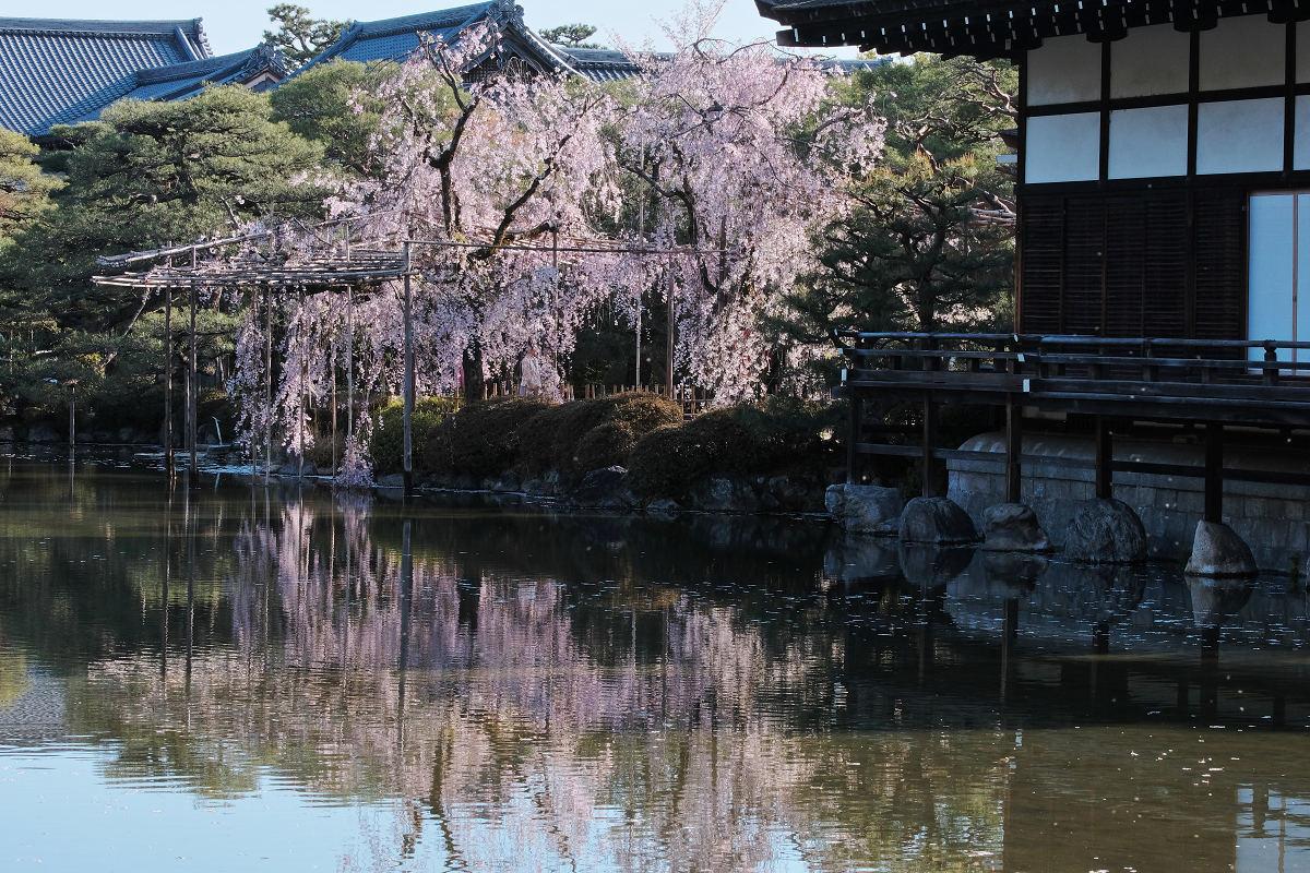 桜 2019 平安神宮_f0021869_23100087.jpg