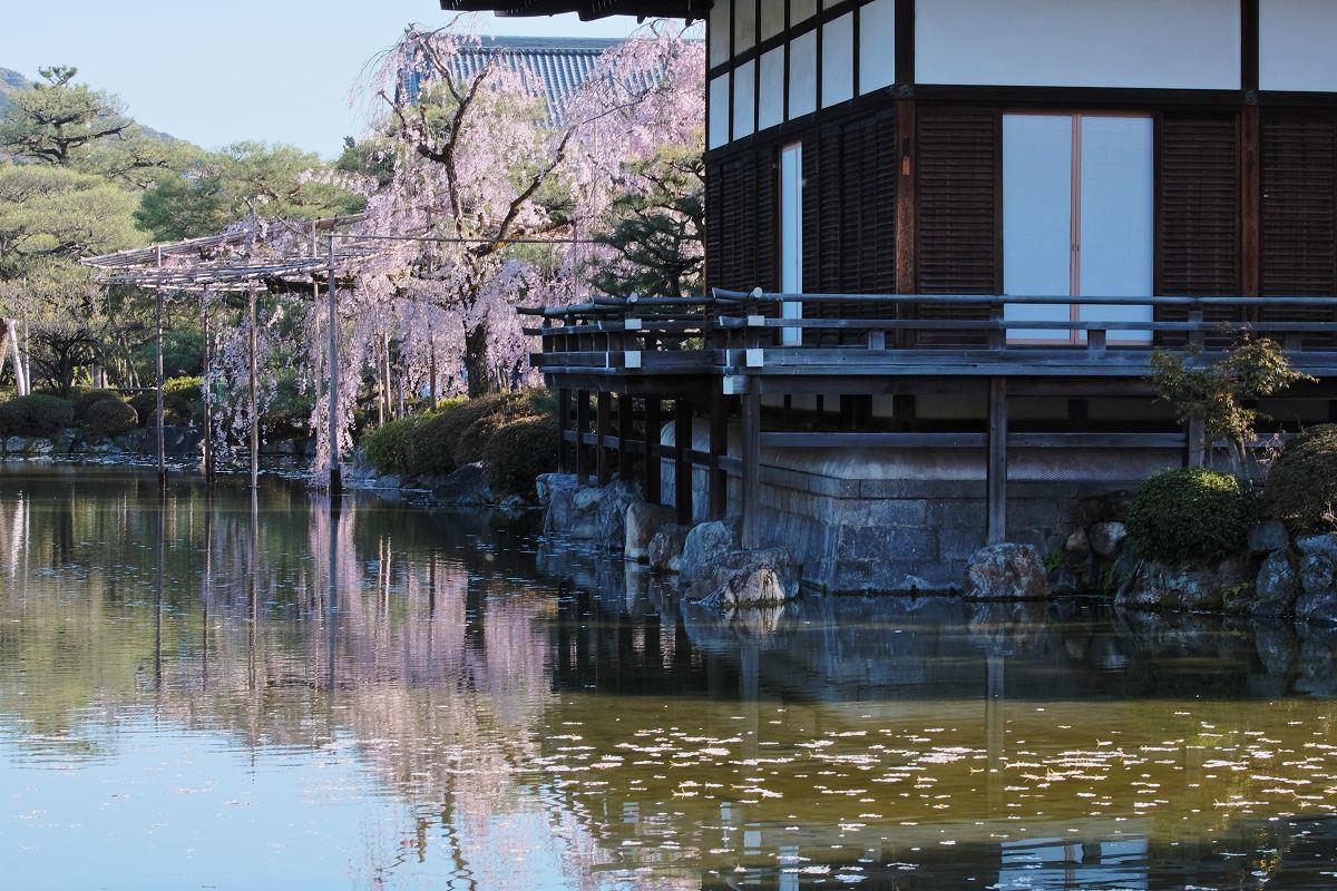 桜 2019 平安神宮_f0021869_23100146.jpg