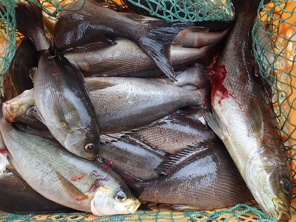 つばきマリーナ釣り大会🎣_a0077071_16180922.jpg