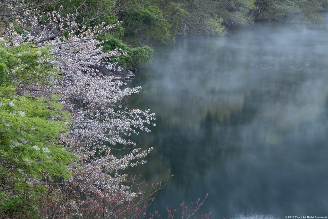 名残の桜 室生湖 1_c0350572_16123002.jpg