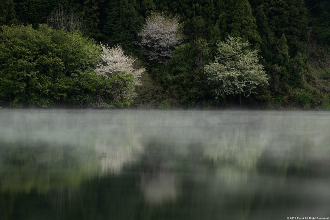 名残の桜 室生湖 2 立ちこめる川霧_c0350572_18202704.jpg