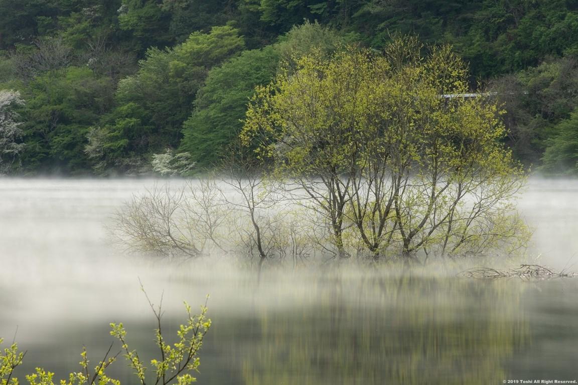 名残の桜 室生湖 2 立ちこめる川霧_c0350572_18204882.jpg