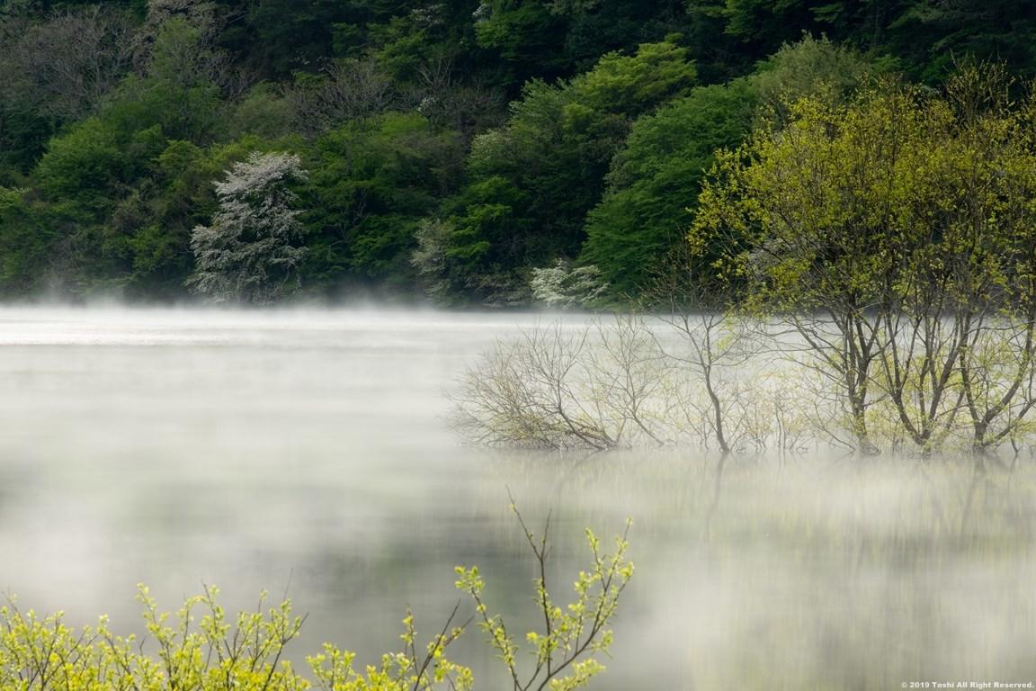 名残の桜 室生湖 2 立ちこめる川霧_c0350572_18224015.jpg